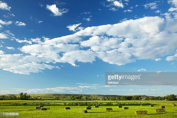 Ciel bleu et vert des champs