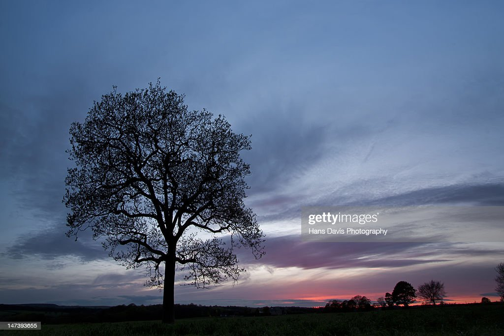 Blue sky after sunset with silhouette trees : Stock Photo