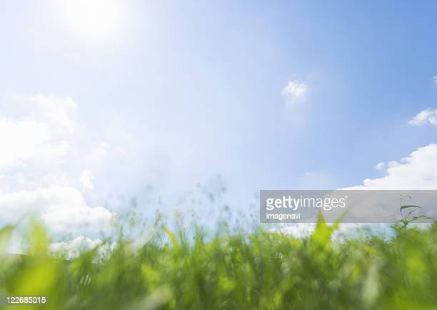 Blue sky and field of grass