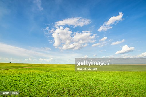 Blue sky and green grass field : Stock Photo