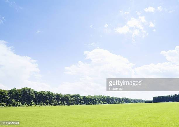 Blue sky and lawn