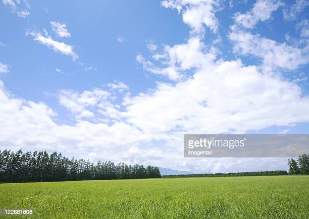 Blue sky and the field of grass