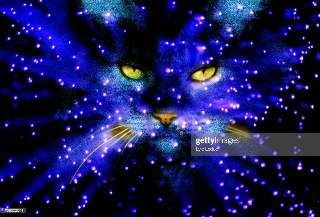 Blue sky cat with yellow eyes : Stock Photo