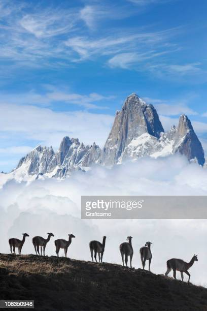 Blue sky over Fitz Roy guanacos Patagonia Argentina Southamerica