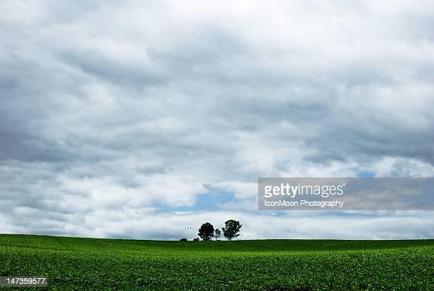 Blue sky over grassland