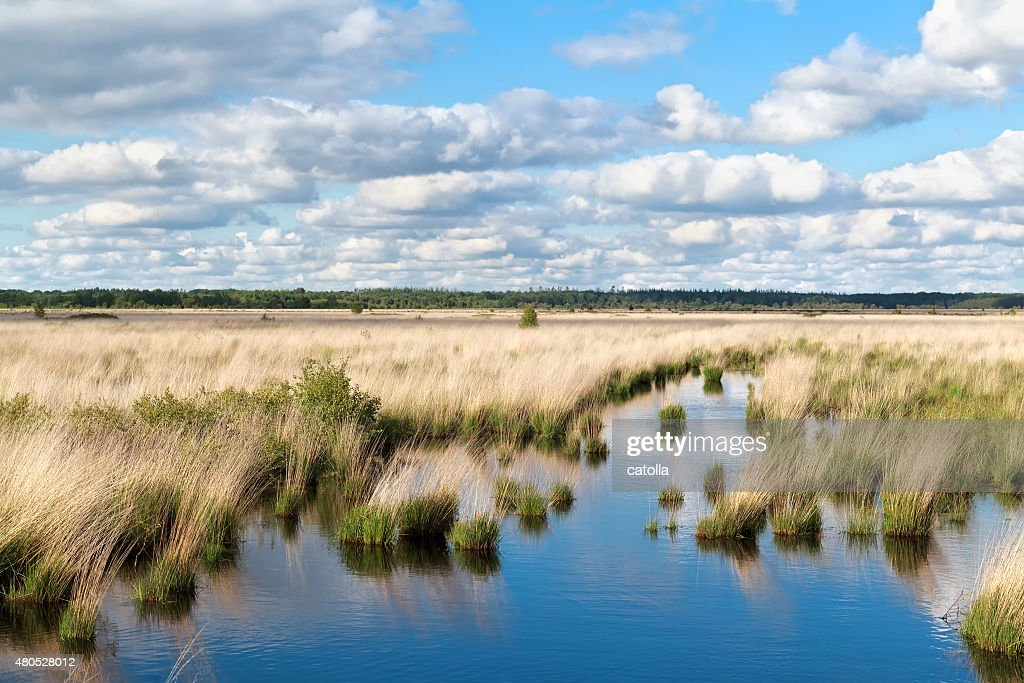 blue sky over swamp water : Stock Photo