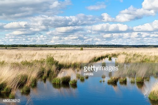 blue sky over swamp water : Stockfoto