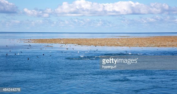 Blue sky sea clouds and coral reef with seagulls. : Stock Photo