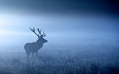 A large red deer stag standing in the blue moonlight