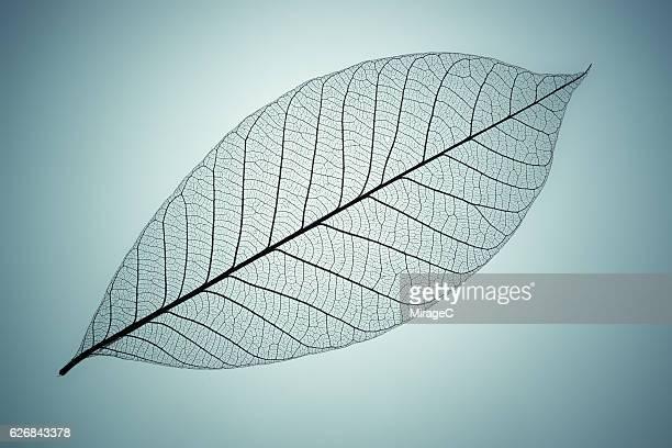 Blue Toned Leaf Vein