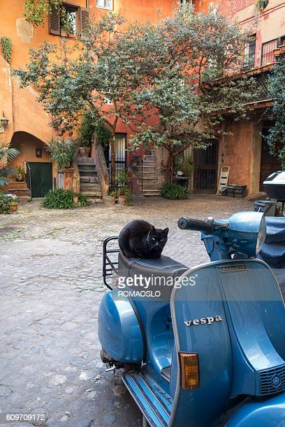 Blue Vespa scooter with cat in rustic courtyard, Rome Italy