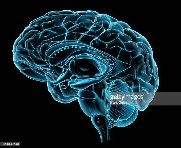 Blue X-ray image of human brain anatomy, 3-D sagittal section (side view, cross section) of human brain and its parts