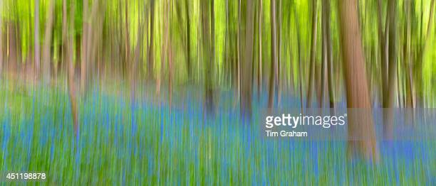 Bluebell wood in The Cotswolds UK