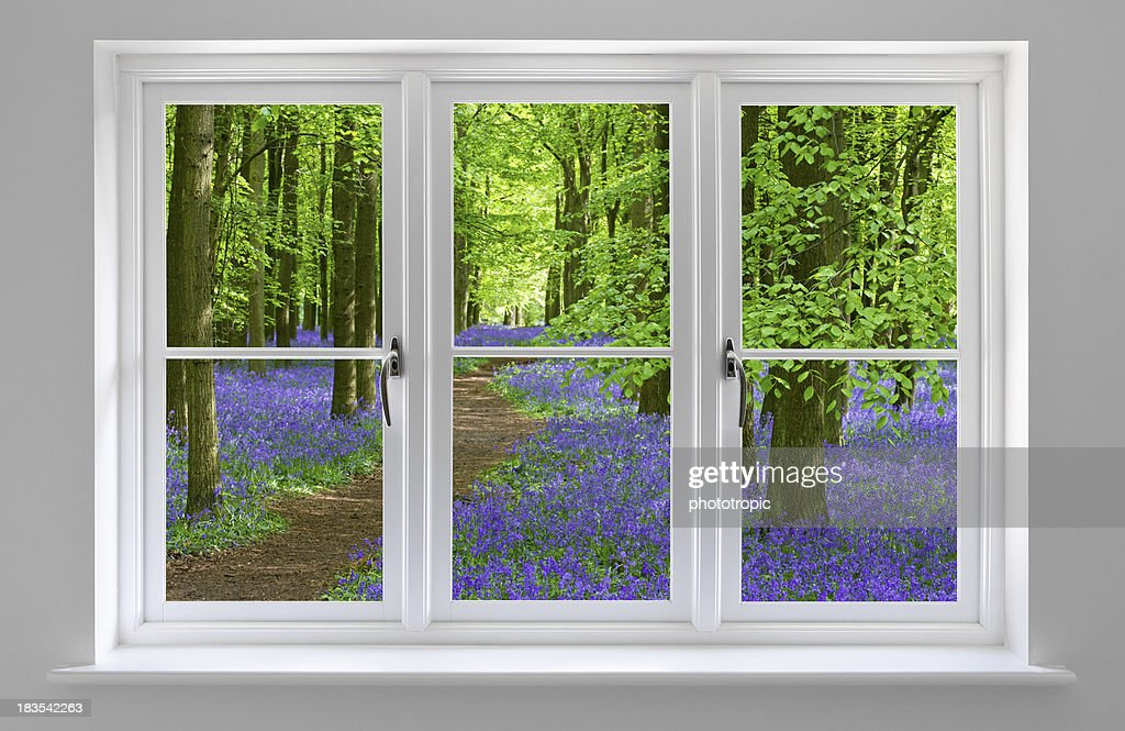 bluebell wood through white window frame