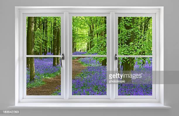 Bosque de jacintos en blanco marco de ventana