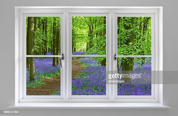 bluebell wood through white window frame