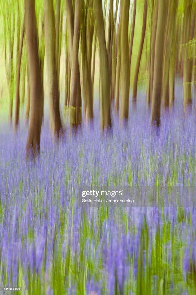 Bluebell woods, Somerset, England, United Kingdom, Europe