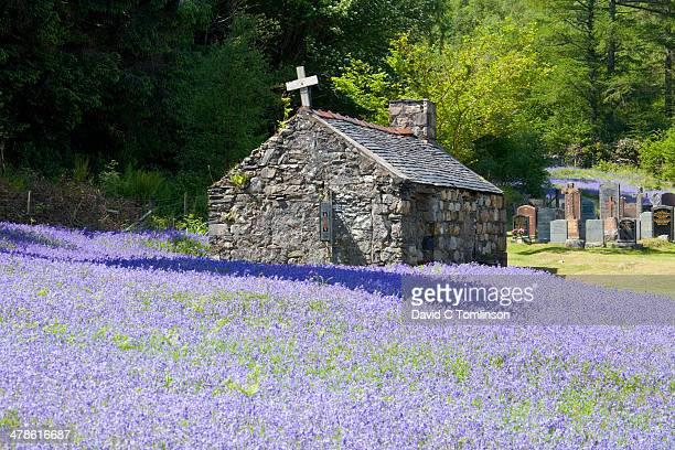 Bluebells, Ballachulish, Highland, Scotland