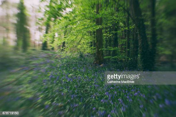 Bluebells with Blur