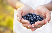 Blueberries in the hands of farmers, women's hands. Fruits, berries, food, nature a