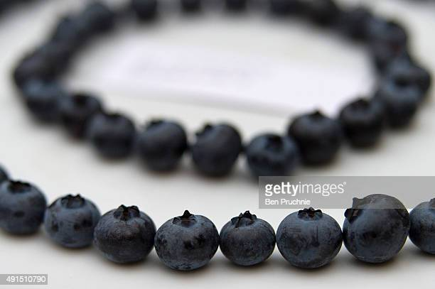 Blueberries on display during the RHS London Harvest Festival Show at RHS Lindley Halls on October 6 2015 in London England The traditional harvest...