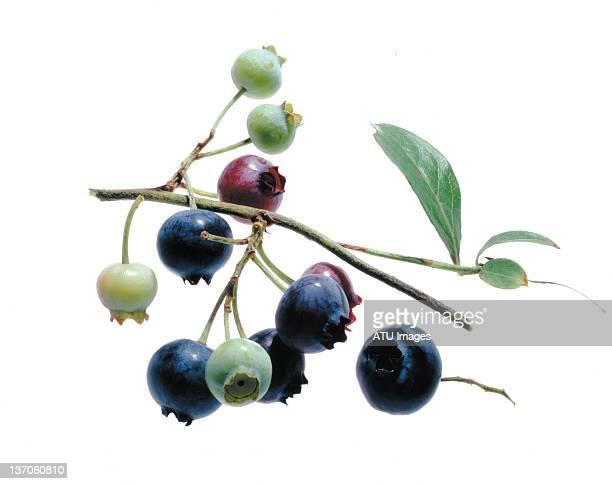 blueberries on light box
