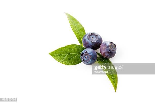 Blueberries, Vaccinium myrtillus