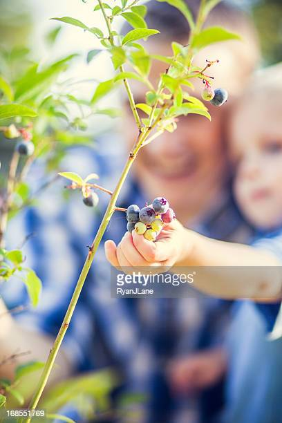 Blueberry Bush and Family