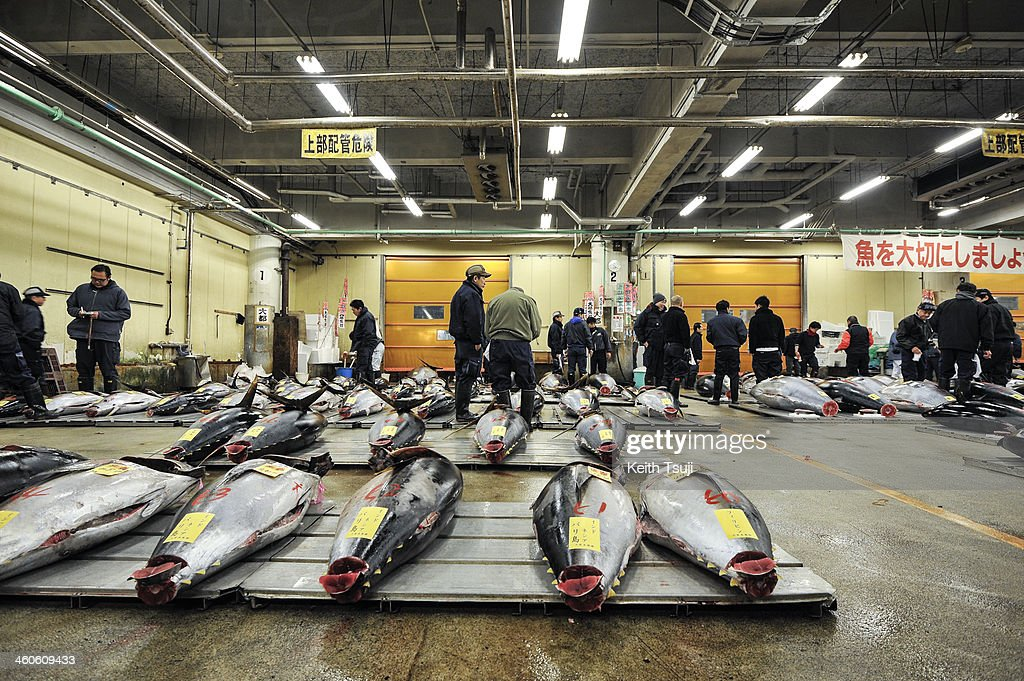 Bluefin tunas are laid on pallets and ready for buyers to inspect on the year's first auction at Tsukiji Fish Market on January 5, 2014 in Tokyo, Japan. Tsukiji Fish Market is best known as one of the world's most famous fish markets, handling thousands of tons of seafood daily.