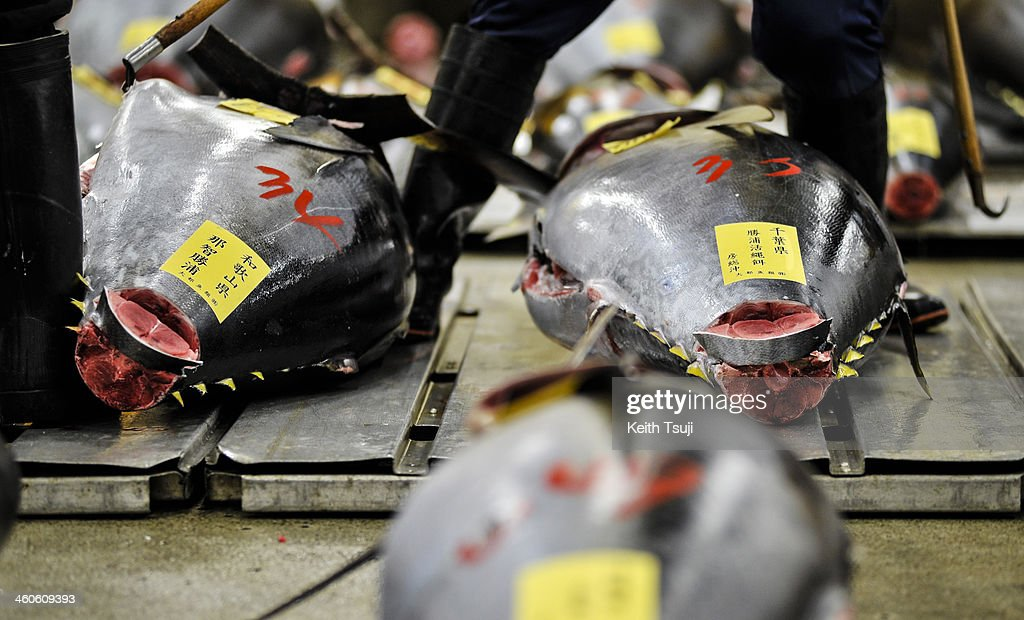 Bluefin tunas are laid on the pallets and ready for buyers to inspect on the year's first auction at Tsukiji Fish Market on January 5, 2014 in Tokyo, Japan. Tsukiji Fish Market is best known as one of the world's most famous fish markets, handling thousands of tons of seafood daily.