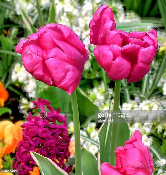 Blumen in den Herrenhäuser Gärten in Hannover