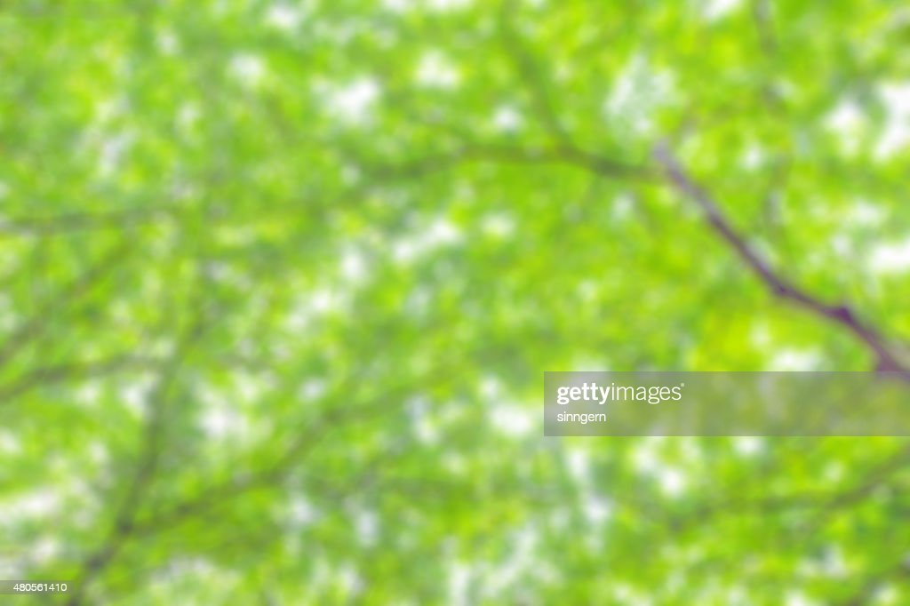 blur beautiful branchof tree for background : Stock Photo