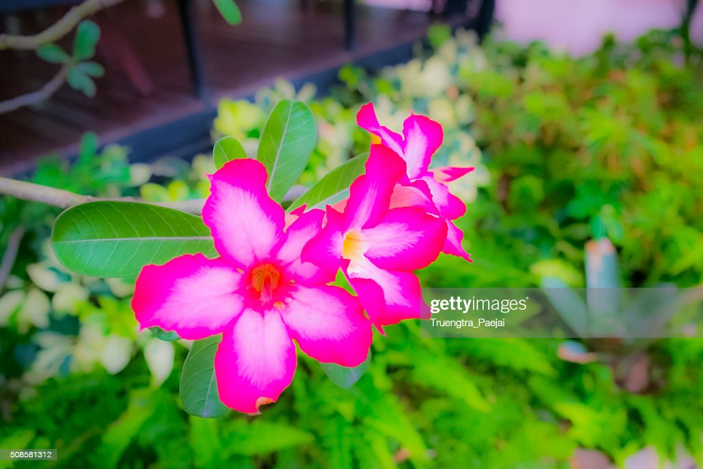 Blur flowers : Stock Photo