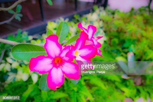 Weichzeichnen Blumen : Stock-Foto