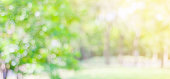 Blur park with bokeh light background, nature, garden, fall, autumn spring and summer season