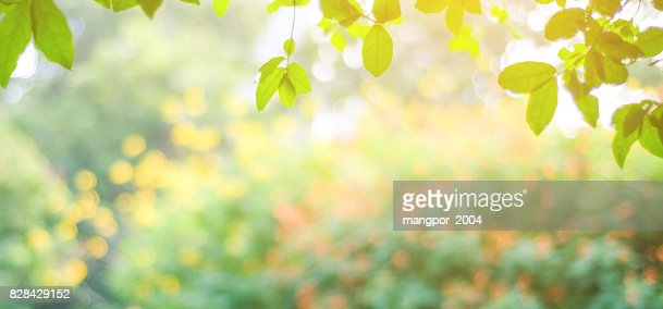 Blur park with bokeh light background, nature, garden, fall, autumn spring and summer season : Stock Photo