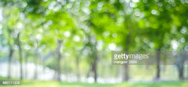 Blur park with bokeh light background, nature, garden, spring and summer season : Stock Photo