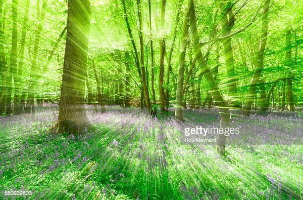 Blur woodland
