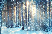 frosty winter landscape in snowy forestblurred background forest snow winter