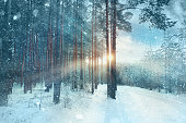 frosty winter landscape in snowy forestwhite wood covered with frost frosty landscapeblurred background snowy forest nature park