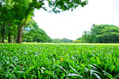 Blurred Backgrounds: Green lawns and trees in green park shot at public metro park in sunny day of summer season with beautiful weather in the morning and the fields of green lawns and big green trees