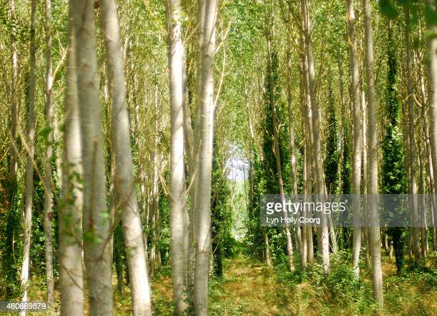 Blurred trees with dappled sunlight