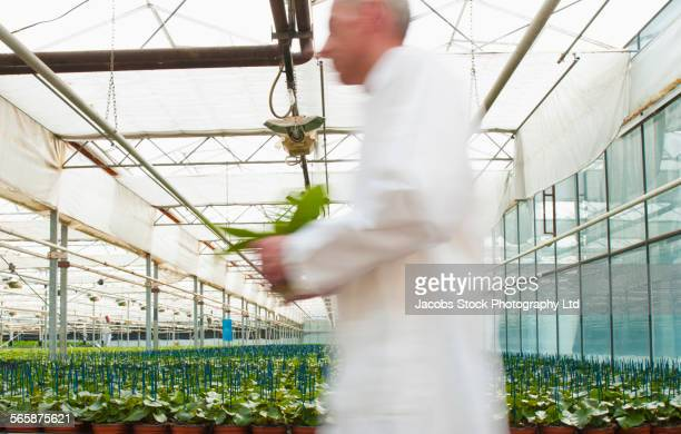 Blurred view of Caucasian scientist walking in greenhouse