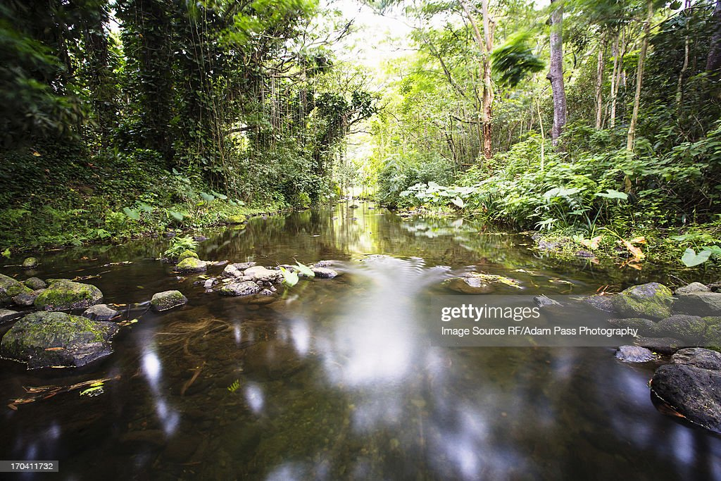 Blurred view of river in forest