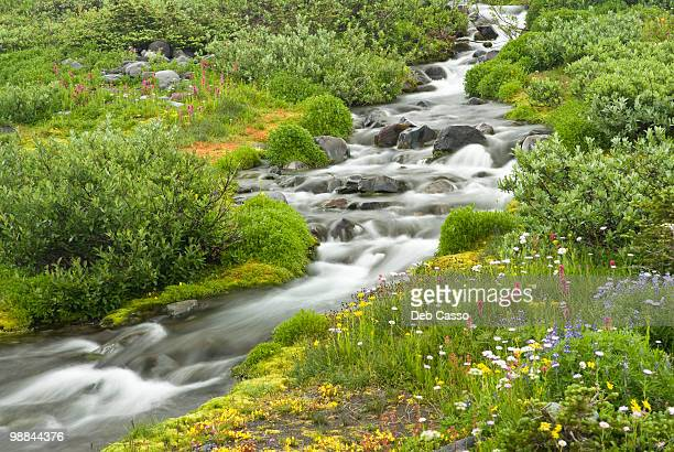 Blurred water in stream and wildflowers