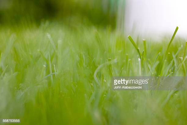 Blurry close up of cut lawn