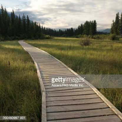 Boardwalk across marsh, summer, sunrise : Stock Photo