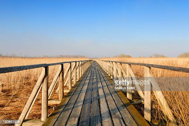 Boardwalk at lake Federsee, Upper Swabia, Baden-Wuerttemberg, Germany, Europe