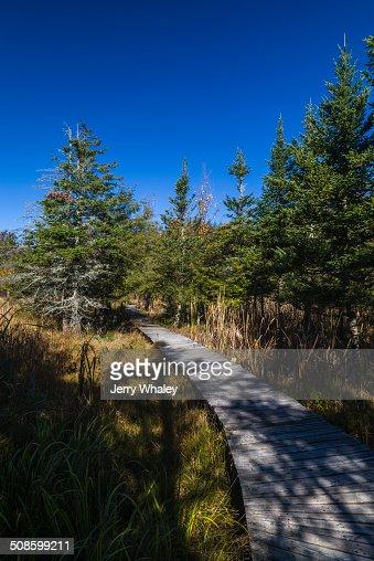 Boardwalk in Canaan Valley, WV : Stock Photo