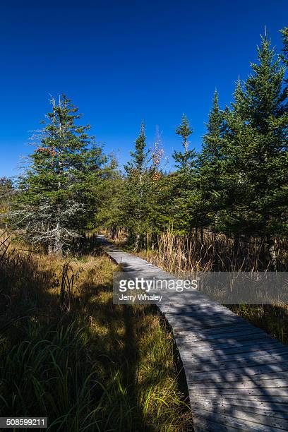 Boardwalk in Canaan Valley, WV